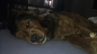 Cute dog is dreaming! - Video