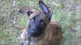 Puppy 8 weeks old- so cute - Video
