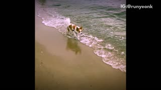 Music slow motion video of white and brown dog running through water at beach