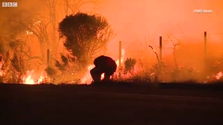 Video of man saving rabbit from wildfire - Video