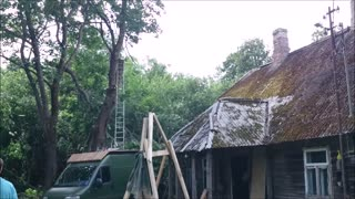 Professional arborists at work  - Video