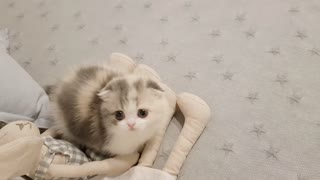 Cute Kitten video that will make your day better