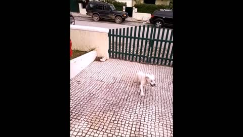 Crazy dog running