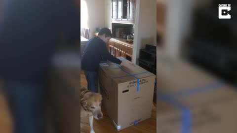 Mom Is Mad At Son For Not Telling Her About Delivery, Then He Opens The Box And Shrieks