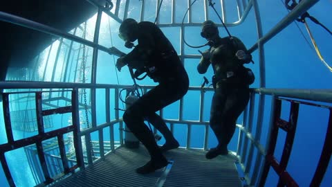 Great White Shark Cage Divers Have The Moves