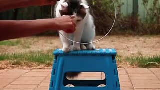 Cat learns how to follow orders - Video