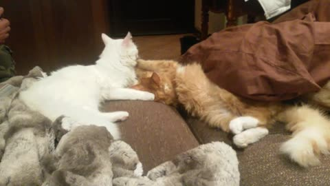 Brother & Sister kitties taking care of each other