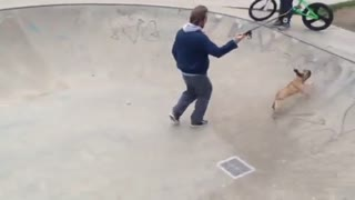 Self-taught skateboarding dog is better than most humans