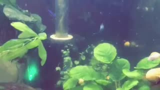 Mystery Forest Tank