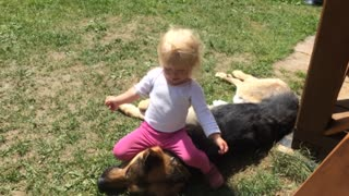 Little girl shares special friendship with German Shepherd - Video