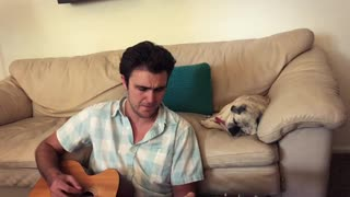 Pug mellows out to owner's acoustic guitar session - Video