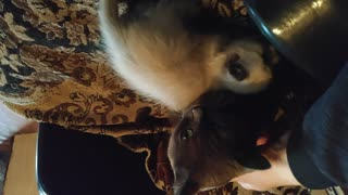 playing with a kitten (my best pet)