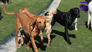 Coolwag Video of the Day of the best dogs in the world. Feb 22, 2021
