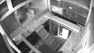 Chicken laying egg in coop nest