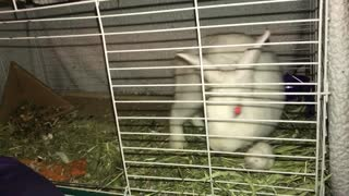 Bunny rabbit kisses her pet mouse goodnight