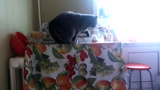 The cat ate all my breakfast  - Video