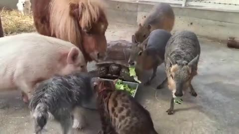 animals  eat together