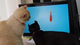 Two Cats Trying to Catch Fish On the Screen