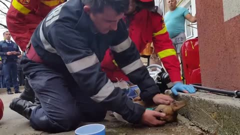 Firefighter Fights For Dog's Life By Performing CPR