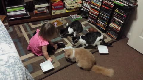 Adorable toddler loves feeding the kitties