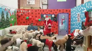 Santa delivers presents to all the good doggies