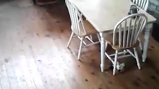 Man Can't Chase Wild Possum Out Of His Home - Video