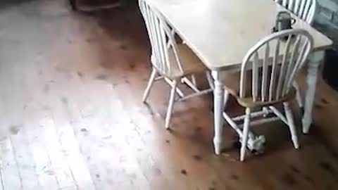 Man Can't Chase Wild Possum Out Of His Home