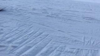 Snowboarder tries to grind rail and faceplants on it - Video
