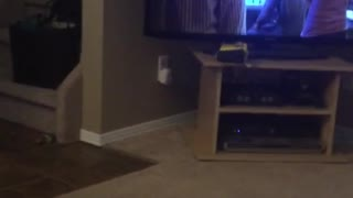 Black cat sitting upright  on sofa yawning  - Video