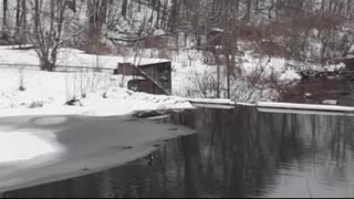 Ducklings on Winter Stream