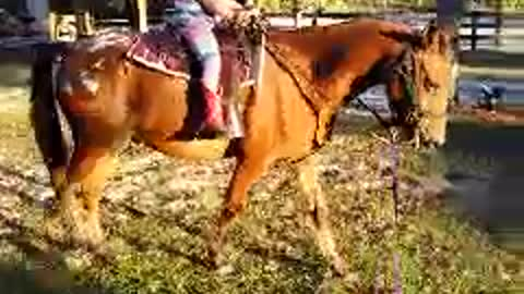 5yr old cowgirl training her pony