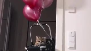 My cat plays with heliam ballons - Video