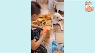 Cute Puppies 2021 Cute Funny and Smart Dogs Compilation