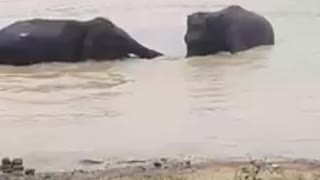 Funny time with baby elephants
