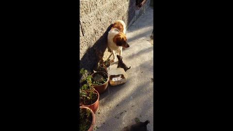 Puppy in trouble calls his brothers