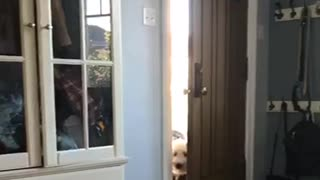 Dog is afraid of vacuum  - Video