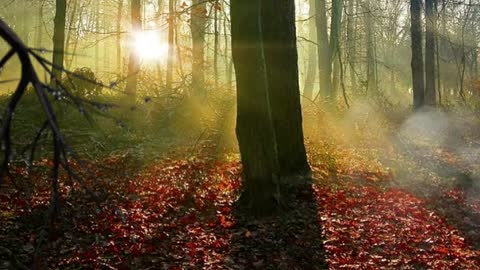 """"""" If YOU go down to the woods today ... """""""