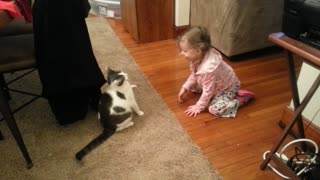 Cat plays tag with toddler