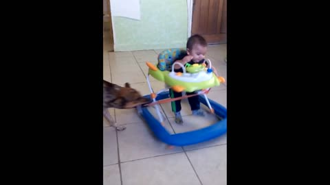 Mutt Dog Takes Baby In Rocker For A Wild Ride