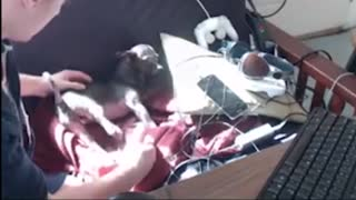 Dog Has Seizure on Live Stream - Video