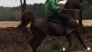 Chisum the Show Horse - Video