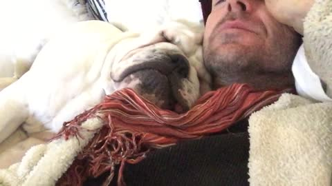 Snoring English Bulldog absolutely refuses to wake up