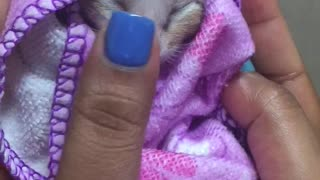 Kitten all Wrapped Up - Video