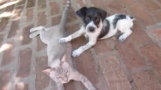 This cat is breastfeeding a puppy who lost his mother - Video