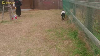 Mana playing with a small dog in a dog run
