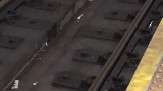 Three rats one bagel subway rails  - Video