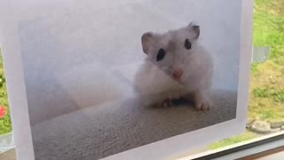 Daughter Launches Convincing Campaign for a New Hamster