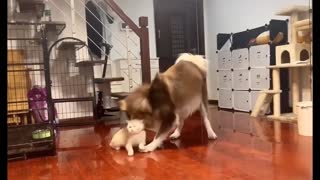 This is a funny video of a dog and a cat.