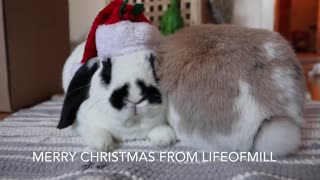 Merry Christmas from @lifeofmill  - Video