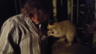 Greedy Raccoon Steals Food Out Of Man's Pocket - Video